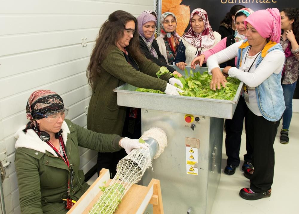 Ülkenin tarım yükünü sırtında taşıyan kadınlar yoğun bir biçimde tarlada çalışarak ekonomiye can veriyor.